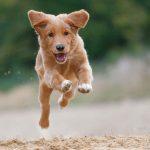 New pets checklist