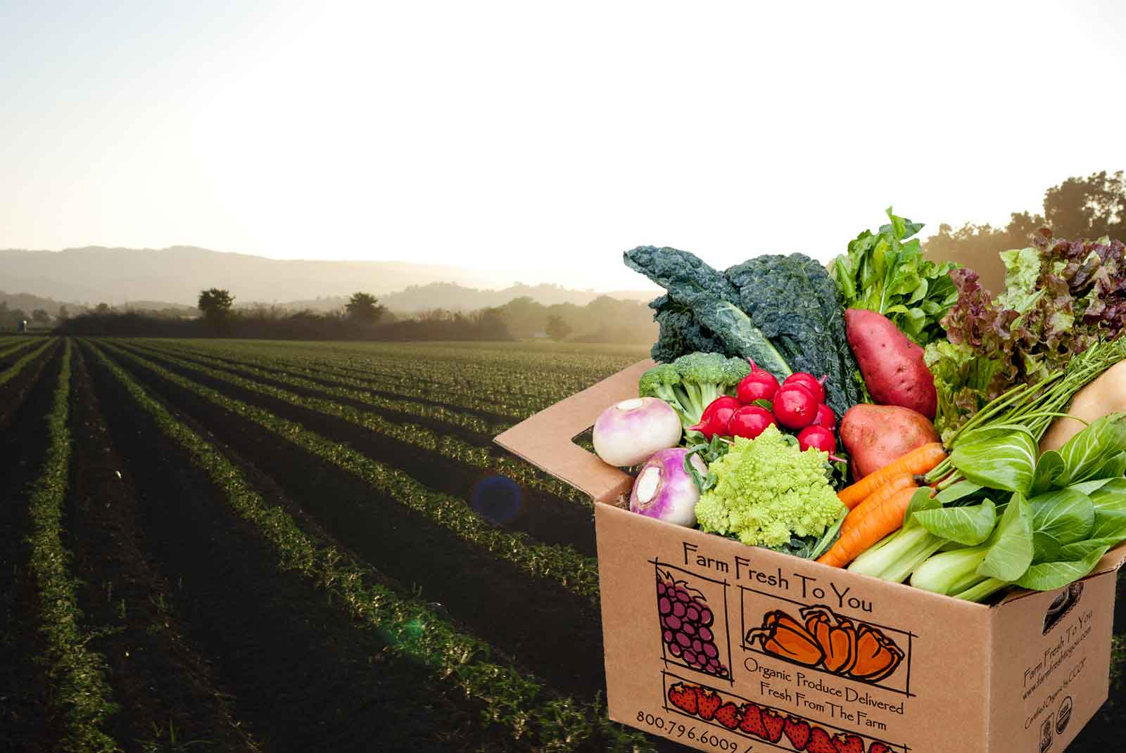 How to find the best organic supplier for your organic food store